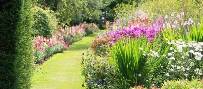 Cespugli aiuole e siepi il giardino riprende vita for Cespugli fioriti perenni da giardino